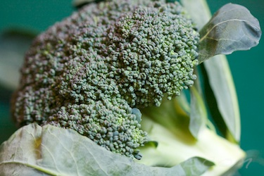 CSA Week 19- broccoli