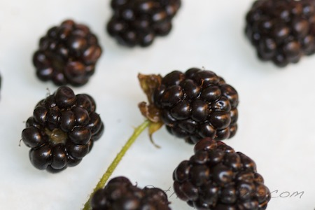 blackberries have a white core