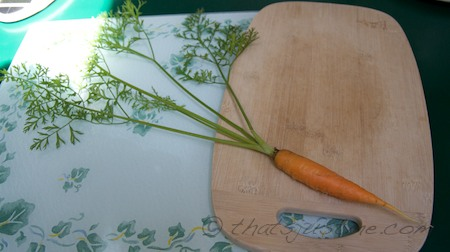 The first pulled full-sized carrot