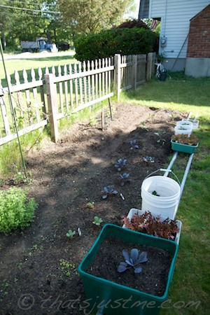 the garden started
