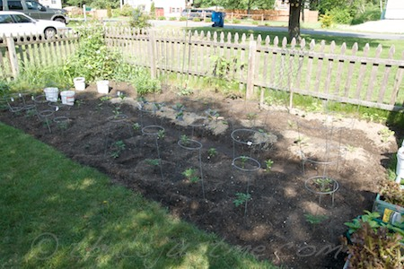 expanded garden, another wide row and moved containers