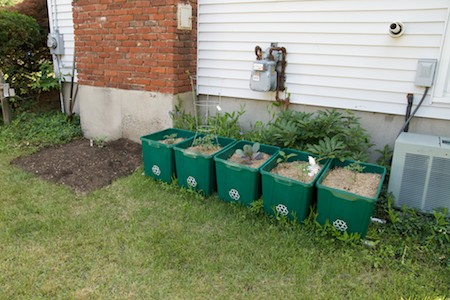 expanded garden, containers near house