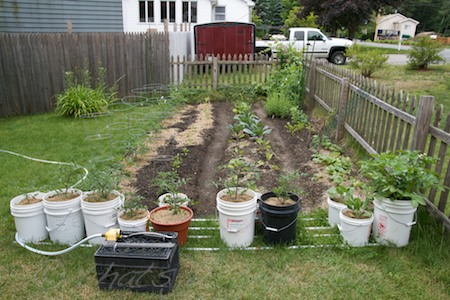 planting in recycling bins