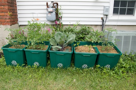 large recycling bins for planting veggies